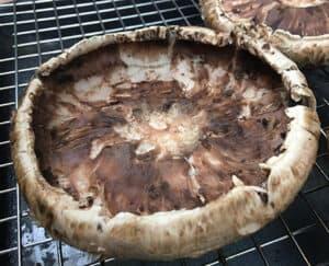hollowed out mushroom