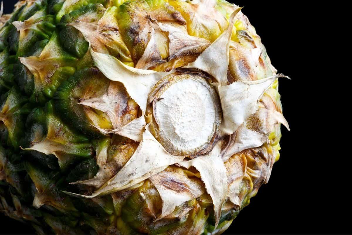 bottom of ripe pineapple