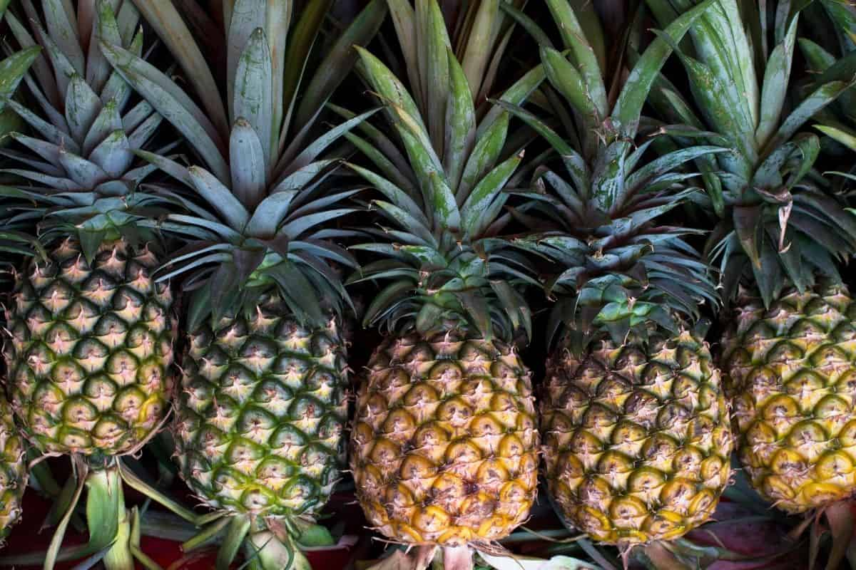 5 fresh pineapples at different stages of ripeness
